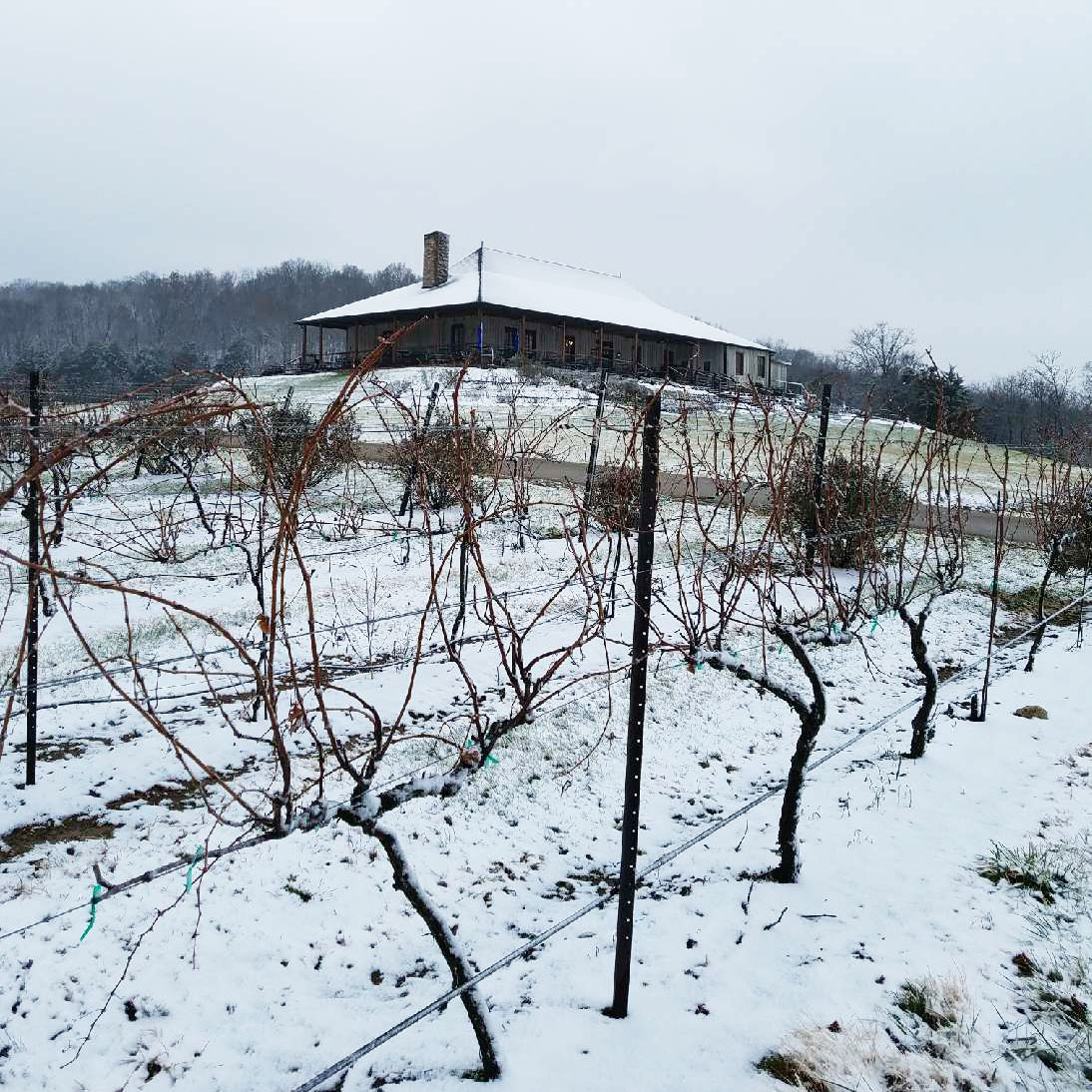 Snow covered vines at Chaumette Winery | MO Wine