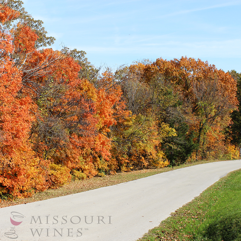 Show Me Wine Country: Fall Drives | MO Wine