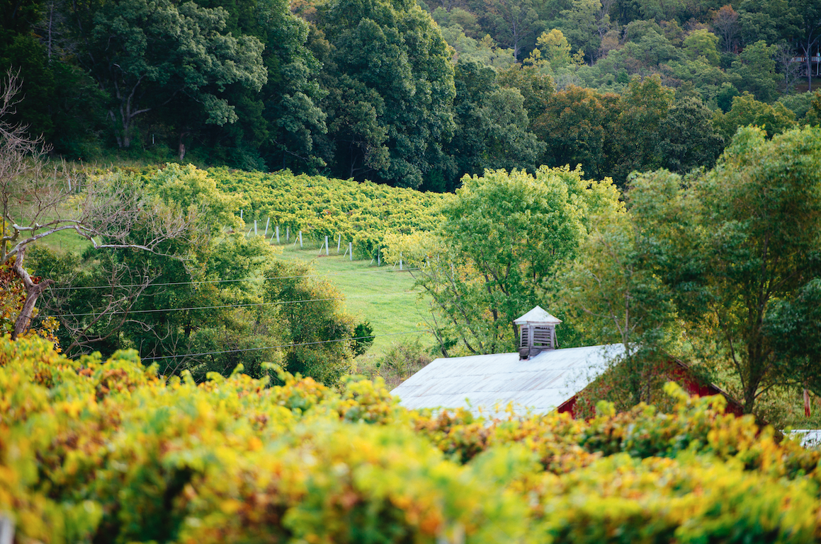 Harvesting - It's Worth the Work | MO Wine