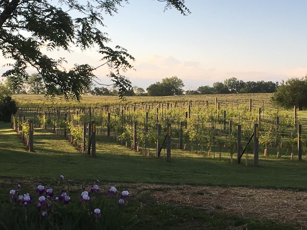 Backyard Vine & Wine, LLC | MO Wine
