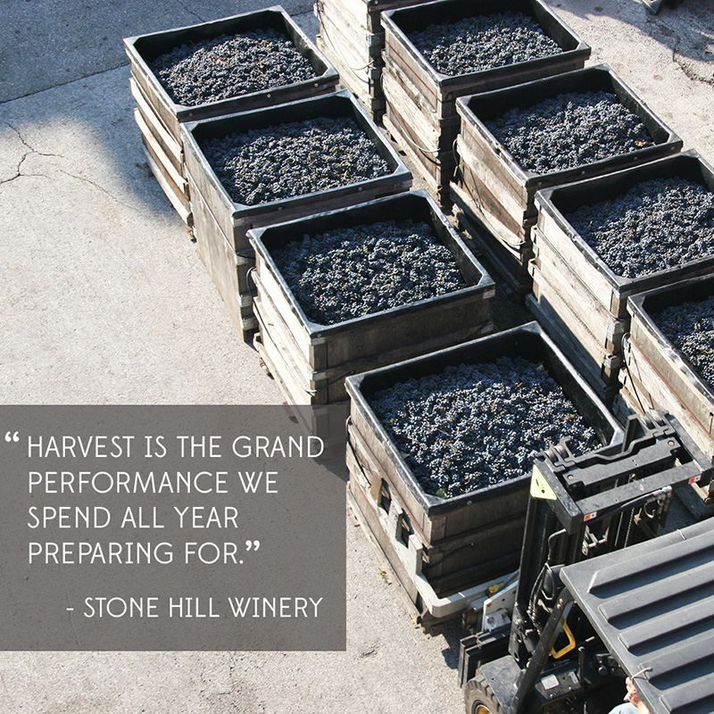 The Meaning of Harvest in MO Wine Country