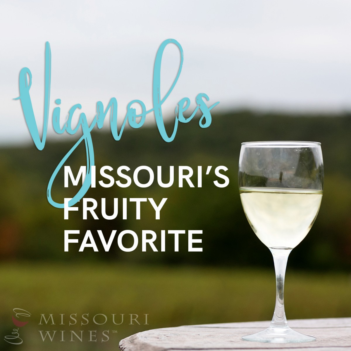 38c2b229aef Vignoles - Missouri's Fruity Favorite | MO Wine