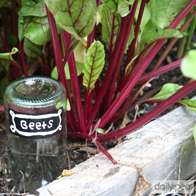 7 Ways to DIY in the Garden with Wine | Bottle Plant Markers