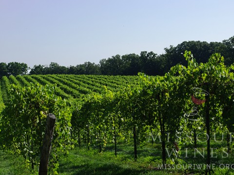 Hermann is home to many wineries and vineyards.