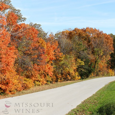 Fall drives in MO wine country are beautiful!