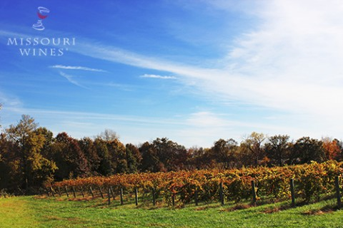 Celebrate the Season of Fall in Missouri Wine Country