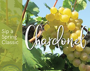 light colored grapes with words sip a spring classic, chardonel