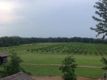 Overhead winery view